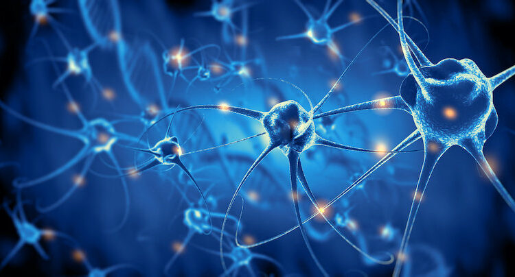 Research identifies 'volume control' in the brain that supports learning and memory